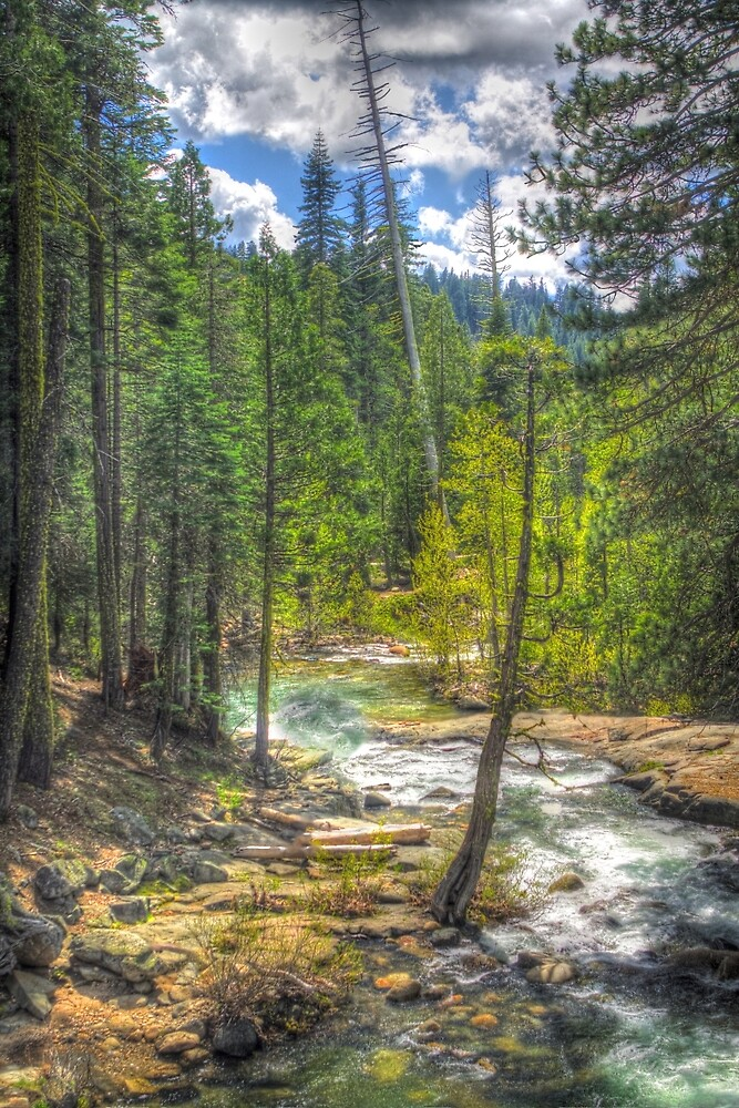 Forest at Cosumnes River (Middle Fork)  by ScHPhotography Digital Paintings and Design