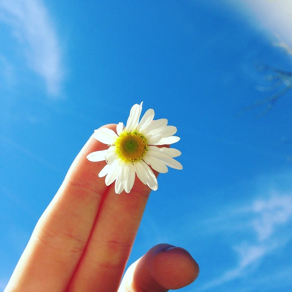 Daisy in the sky by kyliedegrote