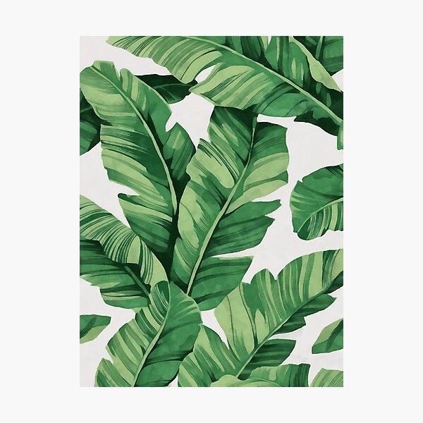 Tropical banana leaves Photographic Print