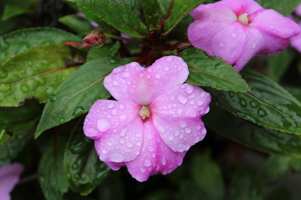 Wet Flowers by skittles2737