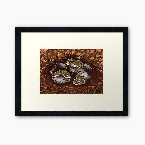 Tuatara: the three-eyed baby dragon of New Zealand Framed Art Print
