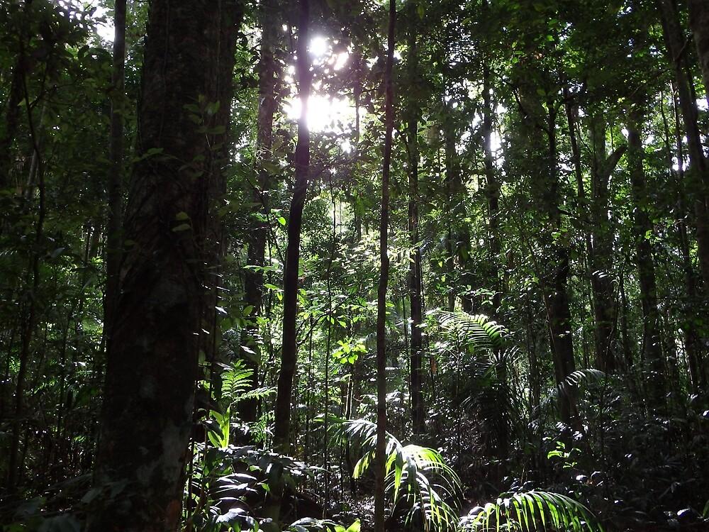 rainforest magic by willowsart