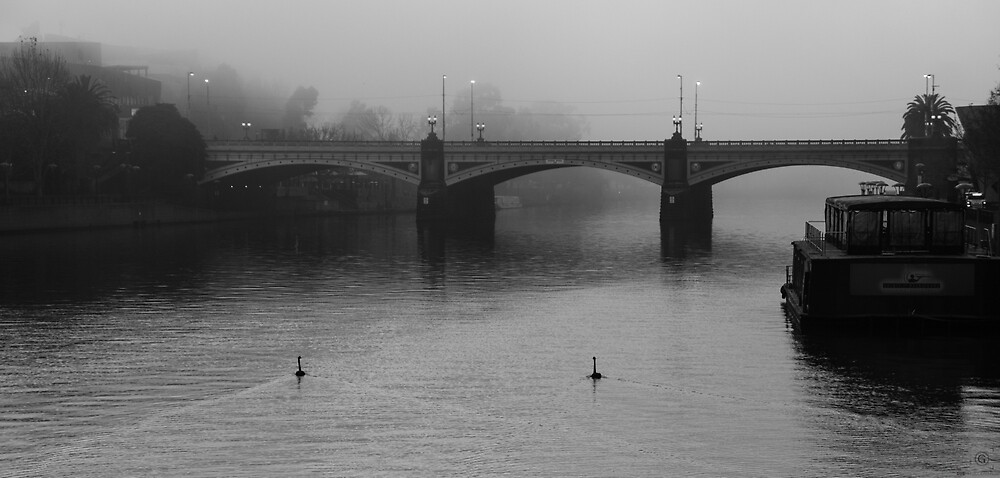 The Swans of Southbank by gubafett
