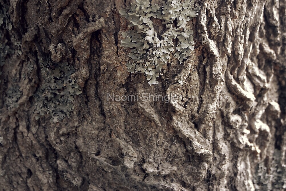 Tree Skin / 1 by Naomi Shingler