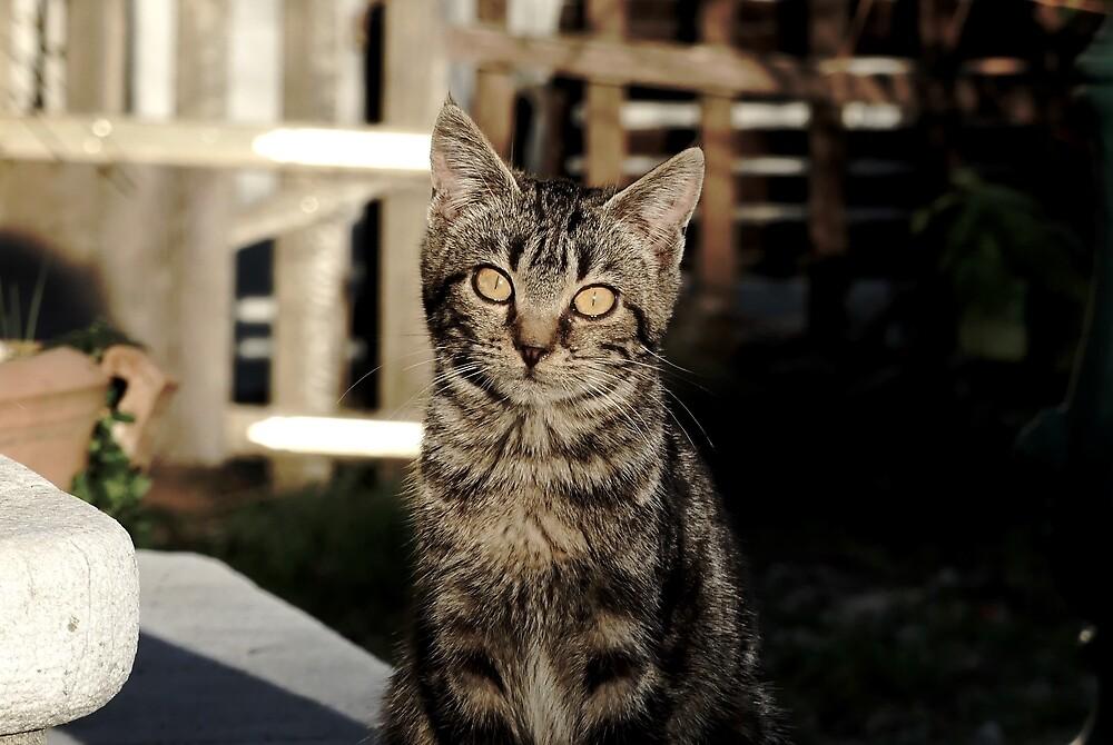 Feline's look by Theea