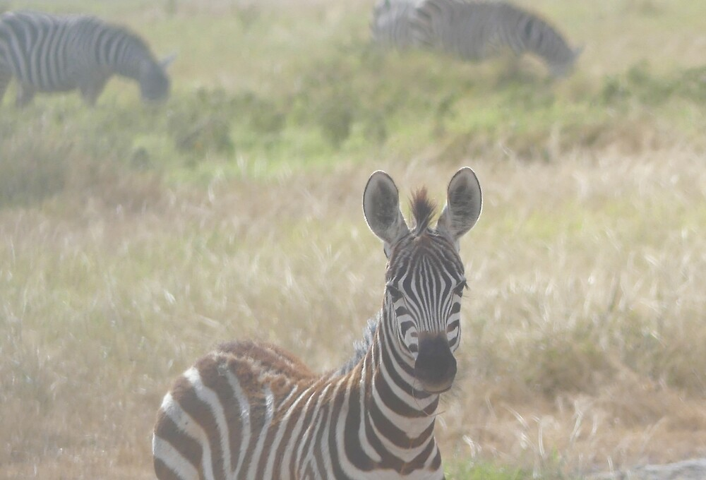 A curious zebra by Theea