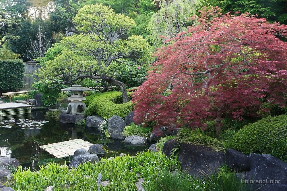 Japanese Garden  by ColorandColor