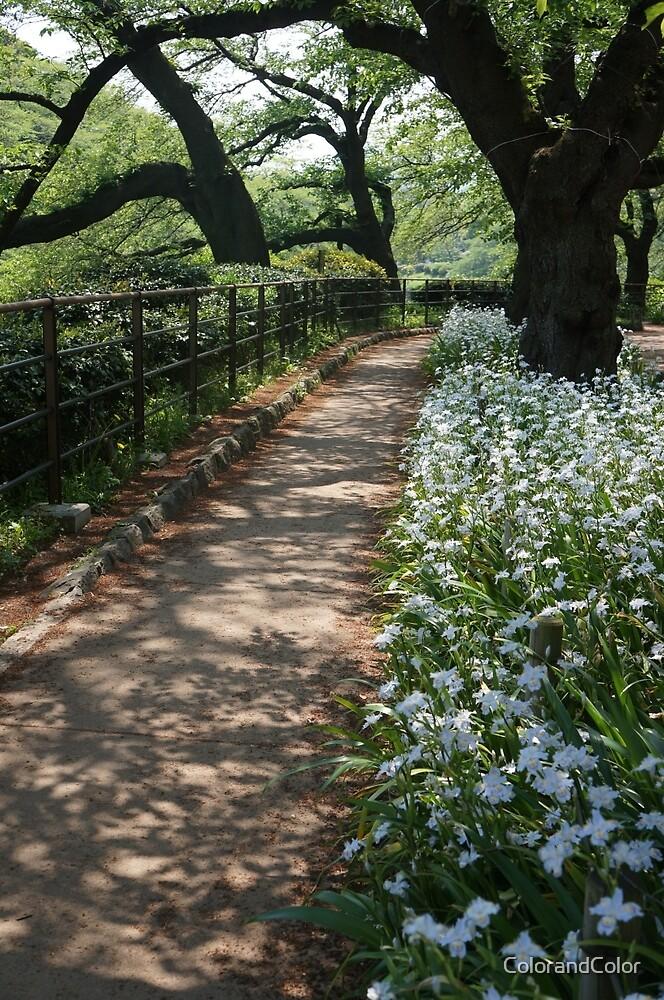 cherry tree, iris ,path  by ColorandColor