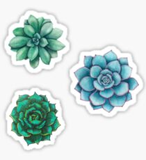 Succulent Drawings  Sticker