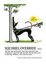 Greyhound Glossary: Squirrel Override by RichSkipworth