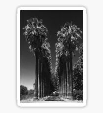 PALM TREES LINED DRIVEWAY Sticker