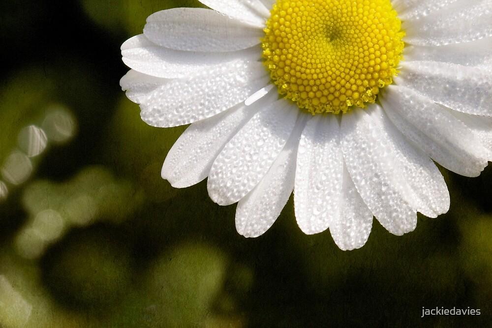Daisy by jackiedavies