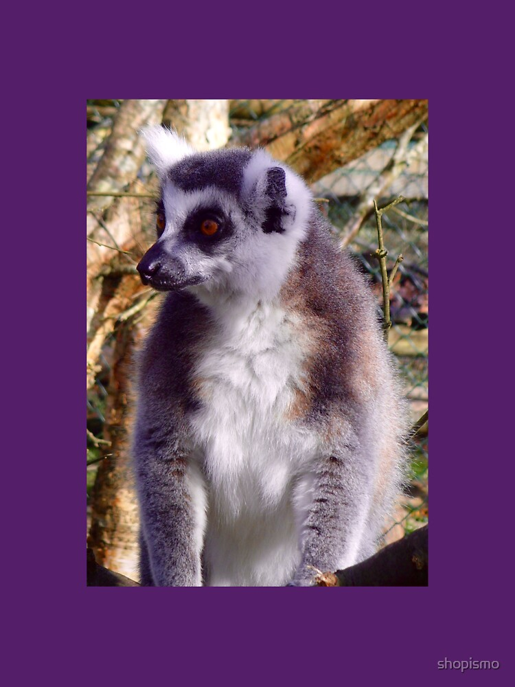 Ring Tailed Lemur by shopismo