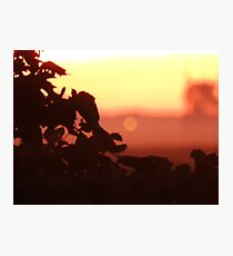 Grape Vines at Dusk Photographic Print