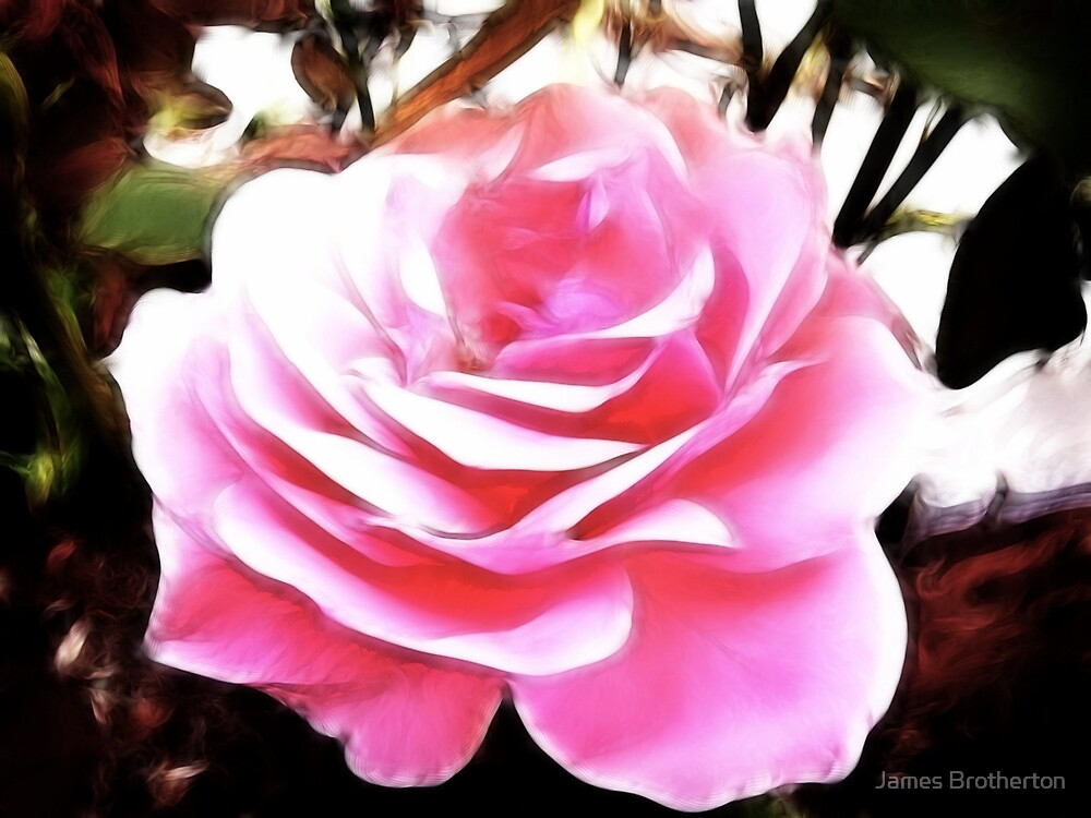 Pink Summer Rose by James Brotherton