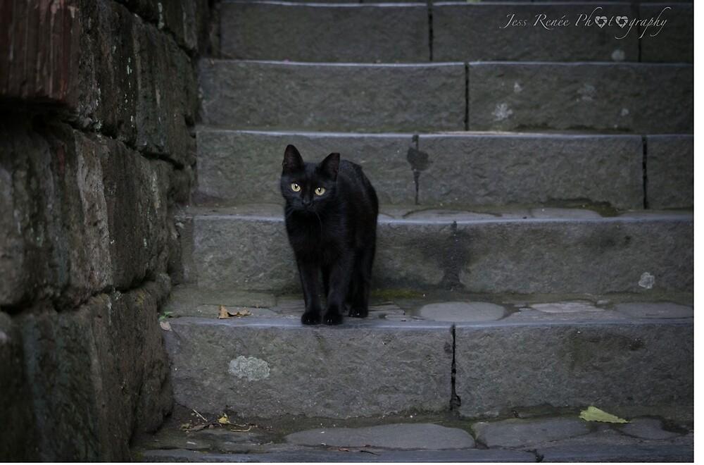 Black Cat by iamjessrenee