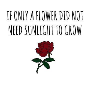 oberhofer lyrics: flowers, sunlight, aurora florealis by auroraflorealis