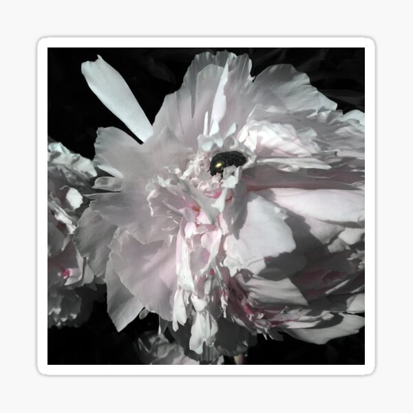 Flowerbug 1999 Sticker