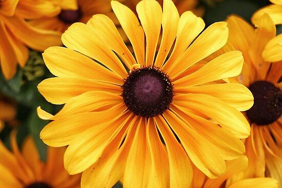 Yellow Wildflower by Rachel Jeffrey