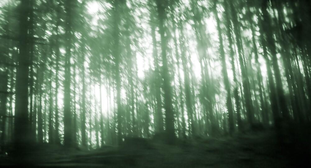 Woods by Joshua McMahon