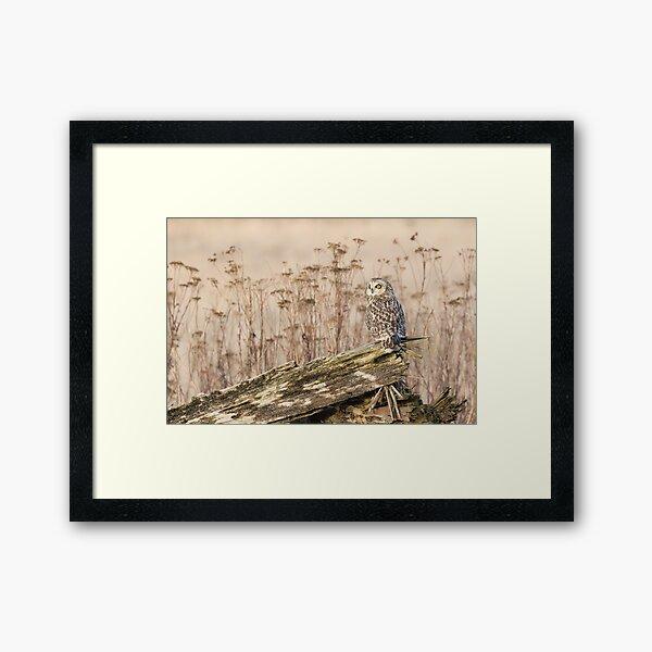 Short-eared Owl in Natural Sepia Framed Art Print