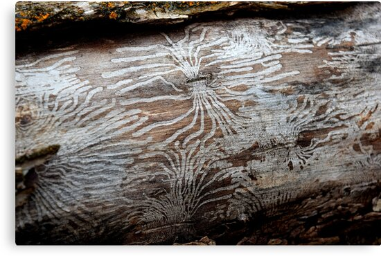 Bug Lines in Bark by Kaitbrooks35