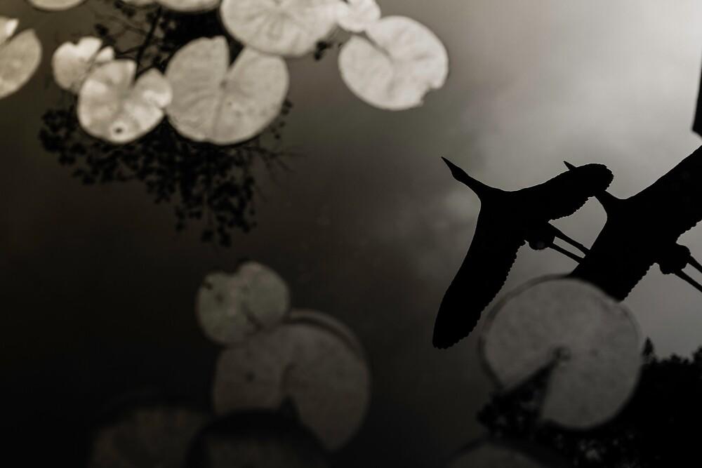 Birds Overhead by Alex Vavreck