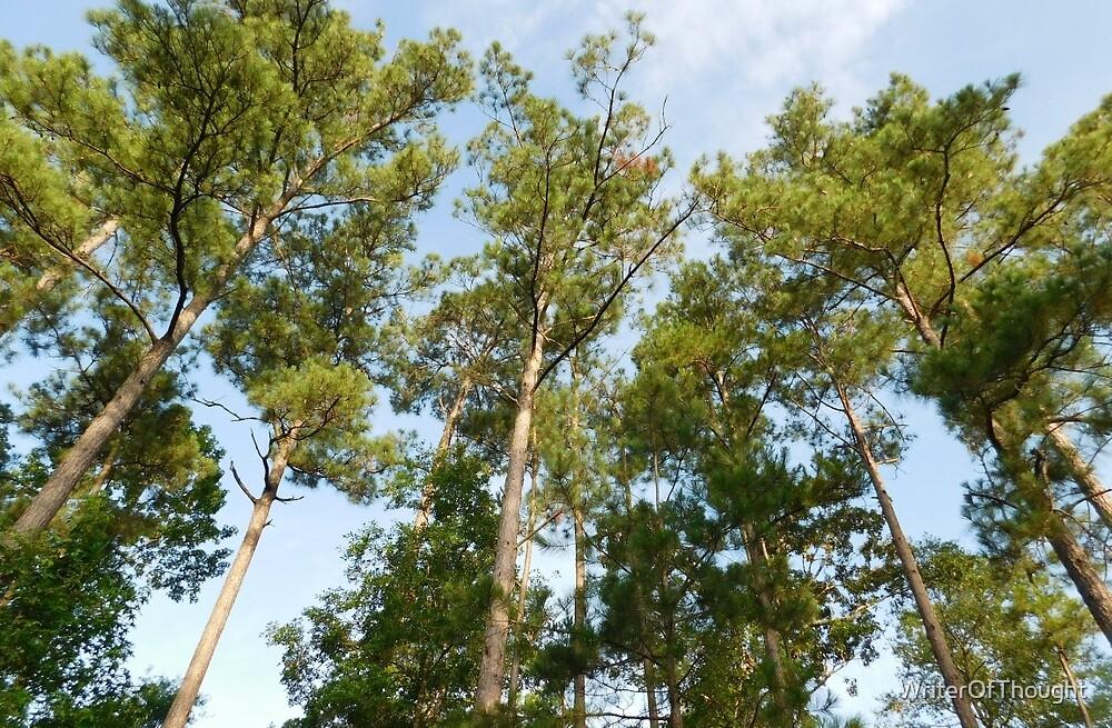 Majestic Pines by WriterOfThought