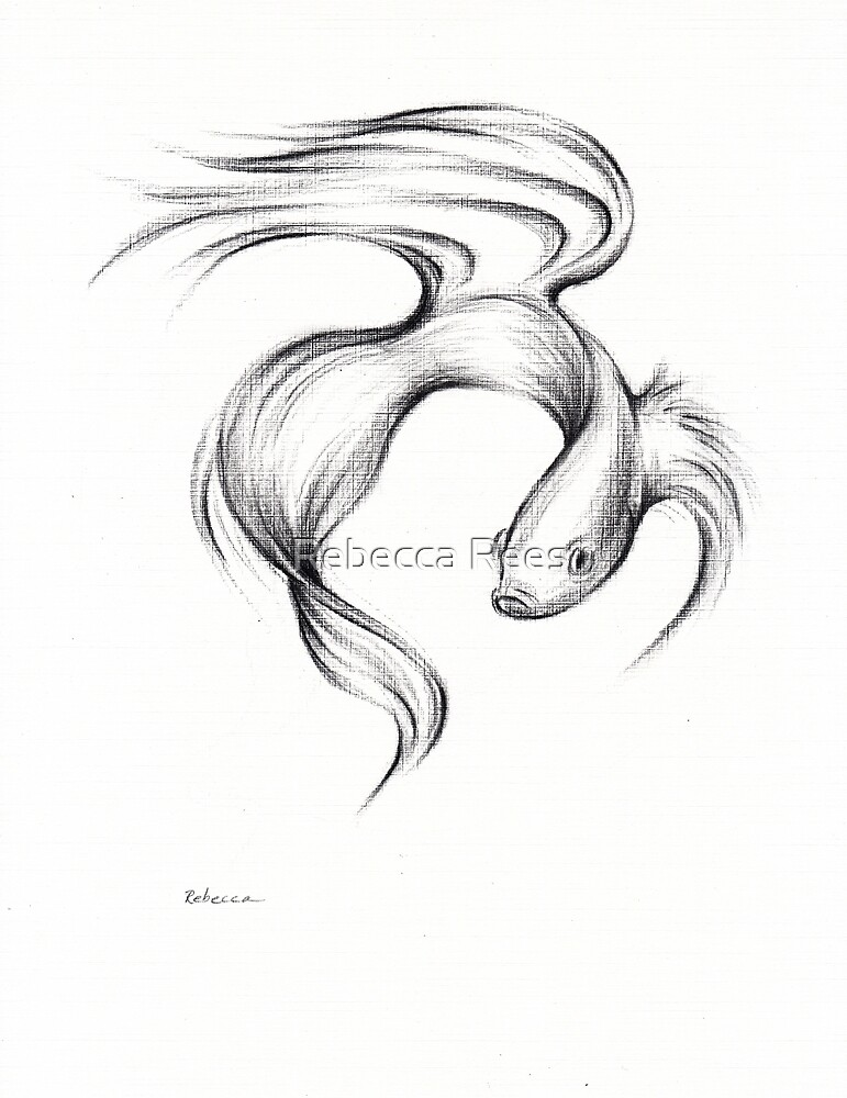 Graceful - Koi fish charcoal drawing by Rebecca Rees