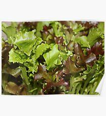 Salad Bar Posters