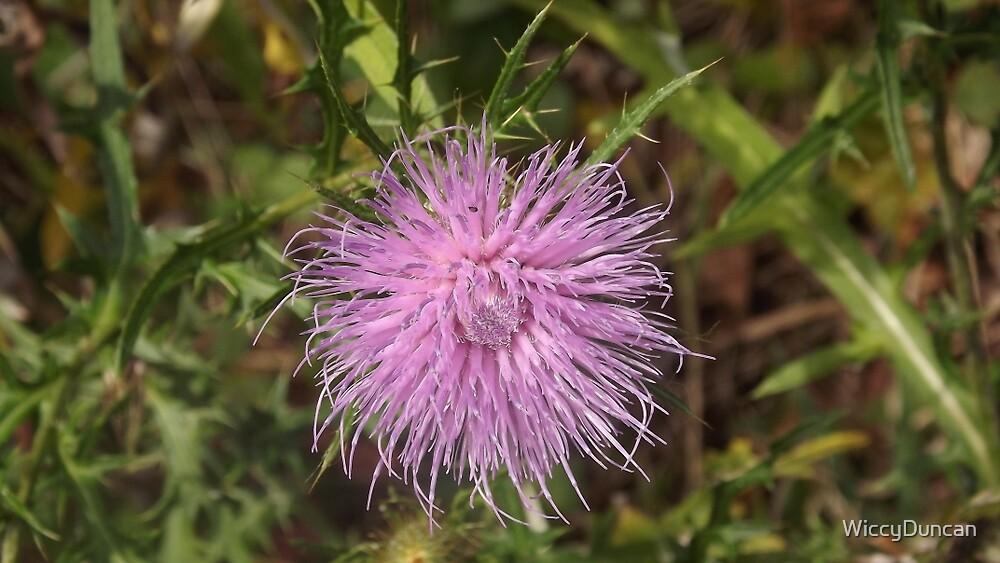 Purple Flower  by WiccyDuncan
