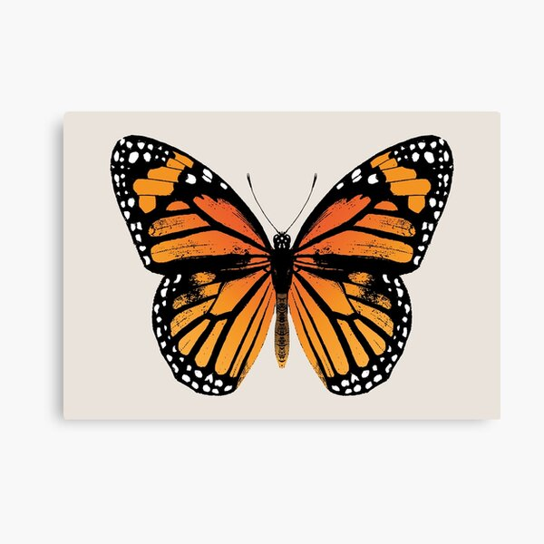 Monarch Butterfly | Vintage Butterflies |  Canvas Print