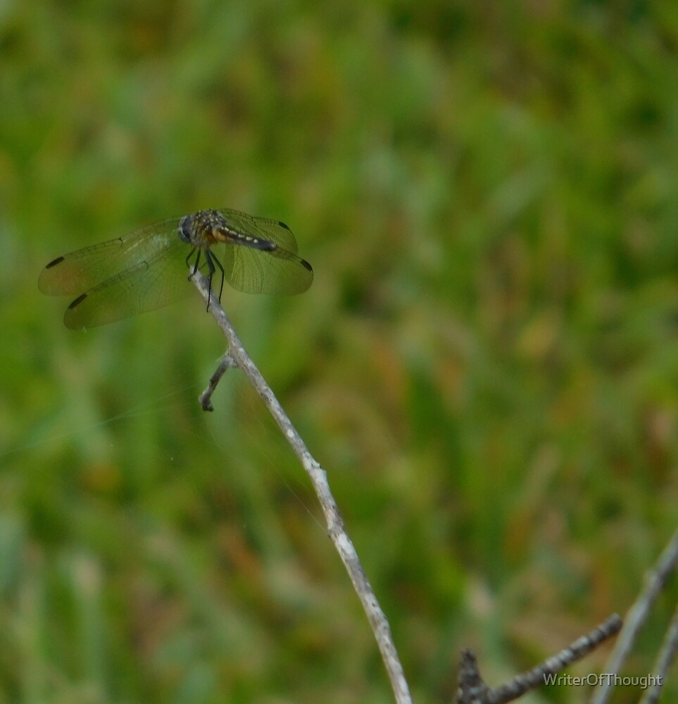 Dragonfly by WriterOfThought