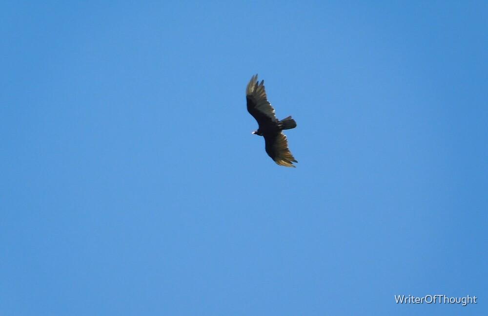 Hawk in flight by WriterOfThought