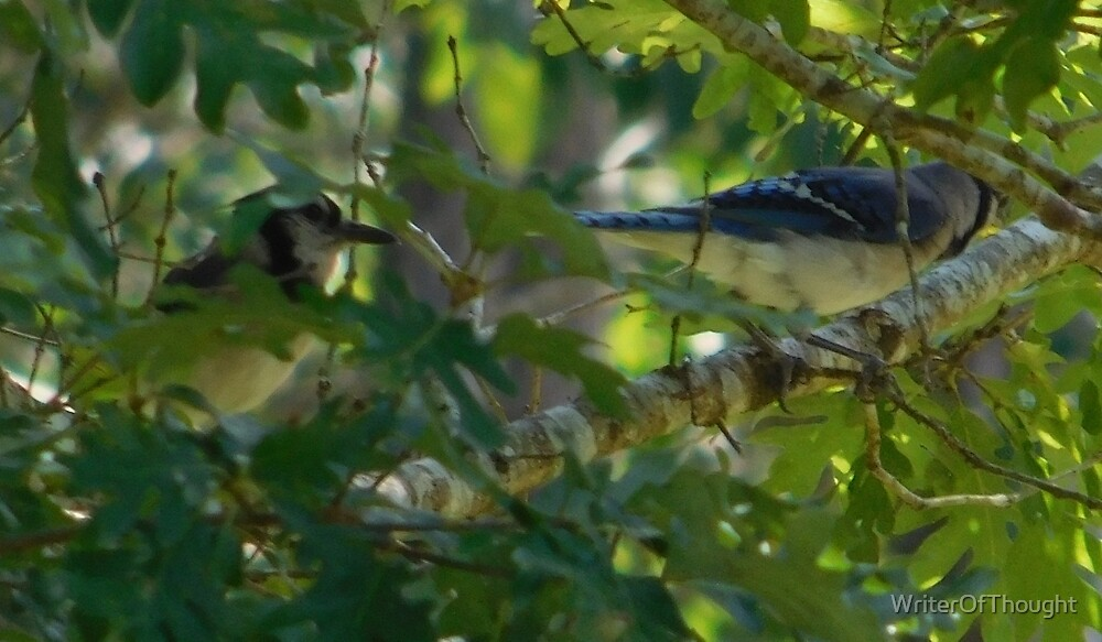 Bluejay couple by WriterOfThought