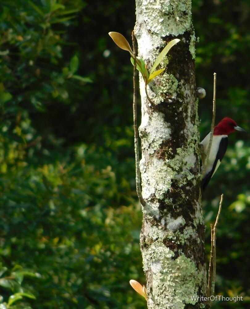 woodpecker by WriterOfThought
