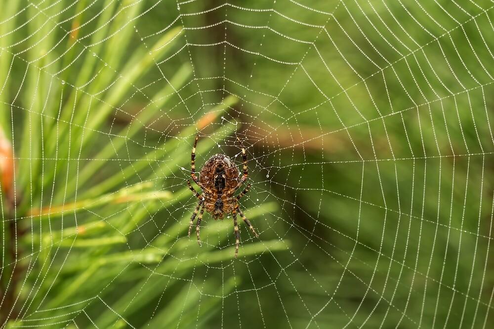 Spider in green by Geraldas Galinauskas