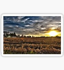 Sunset On The Field Sticker