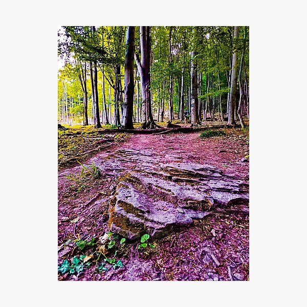 forrest Photographic Print