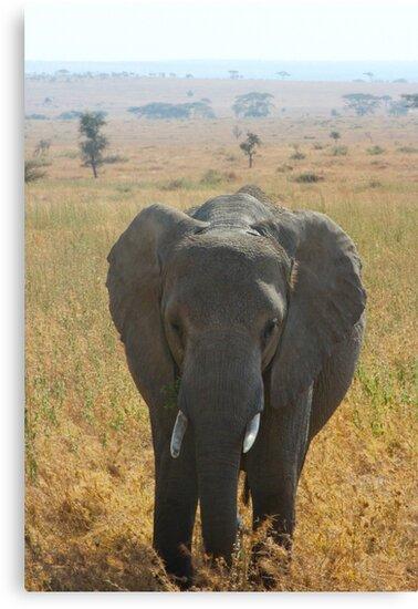 Elephant in the Serengeti by Jenna-Grieve