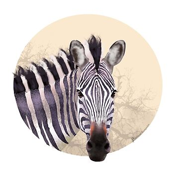 Savanna Zebra by patriciasanjuan