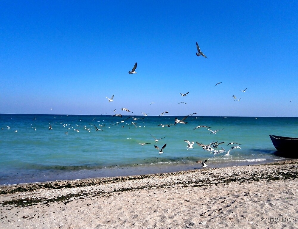 A flock of seagulls on a September day by crystalline