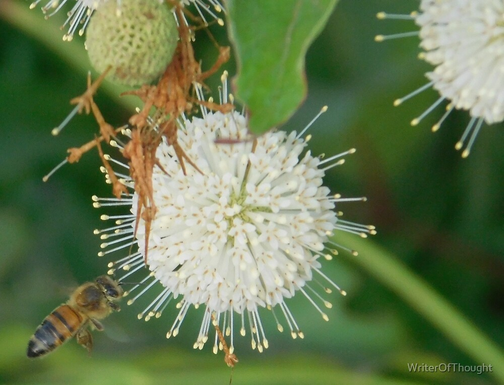 Bee hovering by odd flower by WriterOfThought