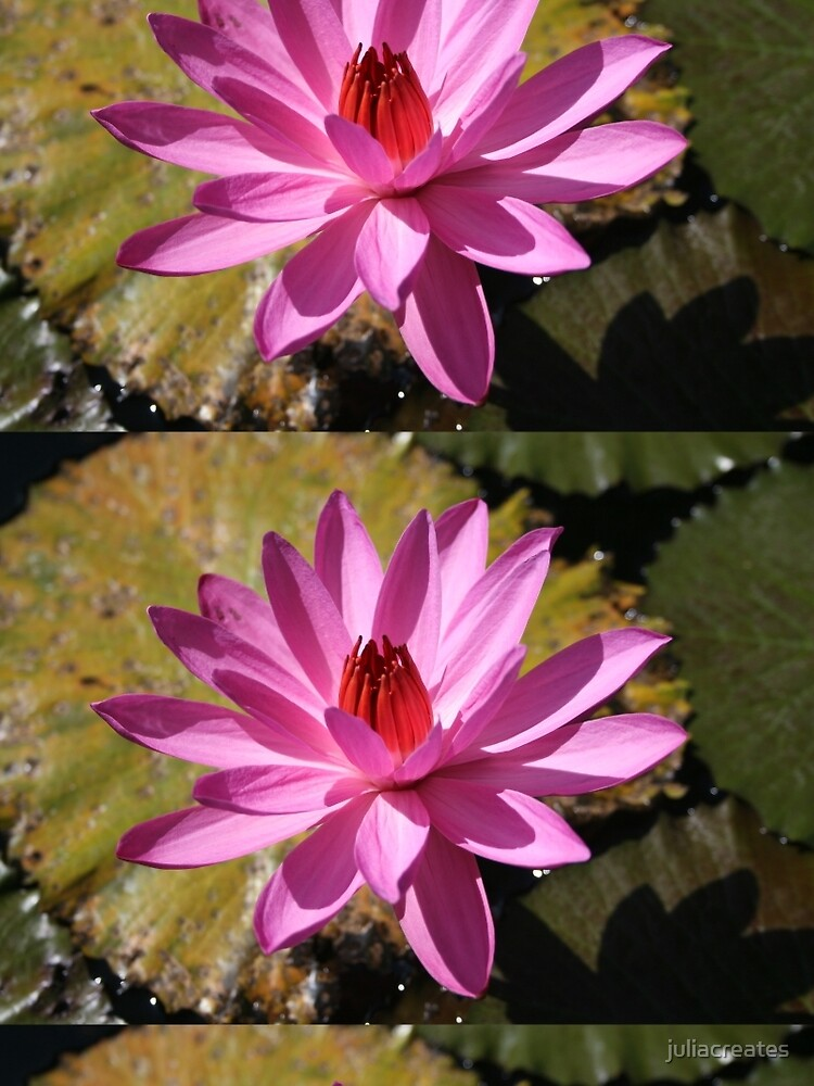 Pink Lily by juliacreates
