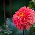 Pink Flower by samsheff