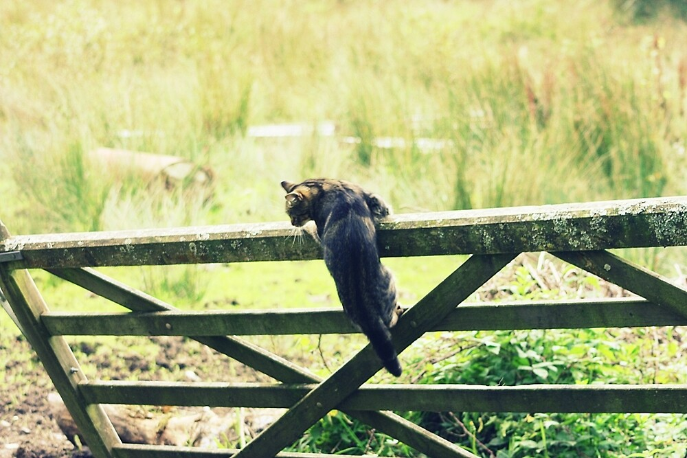 Jumping the old gate by franceslewis