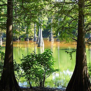Cypress In Frame by WildestArt