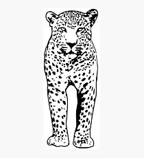 Leopard Wildlife Safari Photographic Print