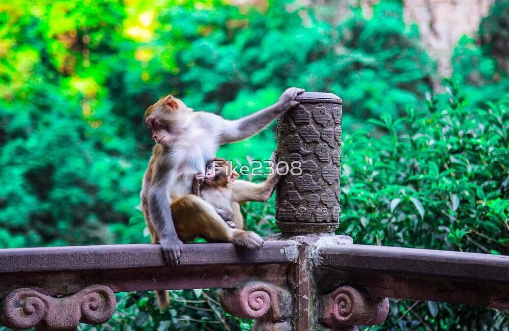 Monkey at Zhangjiajie, China by Fike2308