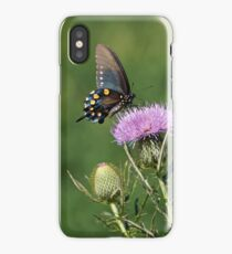 Pipevine Swallowtail Butterfly iPhone Case/Skin